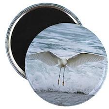 "Born of sea-foam 2.25"" Magnet (100 pack)"