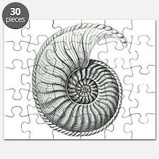 Ammonite Puzzle