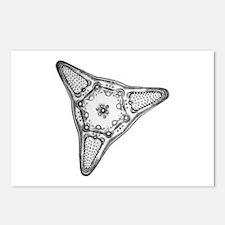 Diatom Postcards (Package of 8)
