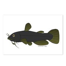 Bullhead Catfish Postcards (Package of 8)