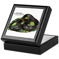 Eastern Indigo Snake Keepsake Box