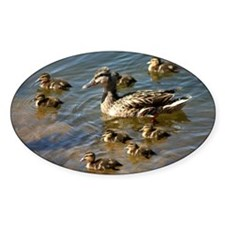 Duck Family Decal