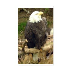 bald eagle Rectangle Decal