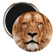 Lion - The King Magnet