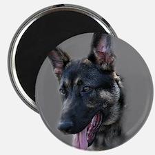Shepherd Trooper Magnet