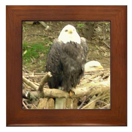 eagles Framed Tile