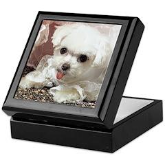 Maltese Dogs Photography Keepsake Box