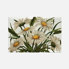 Daisies Victorian Vintage Che Rectangle Magnet