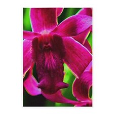 Orchid 5'x7'Area Rug