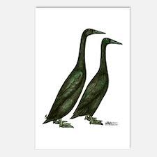 Black Runner Ducks Postcards (Package of 8)