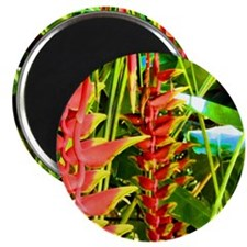 """Tropical 2.25"""" Magnet (10 pack)"""
