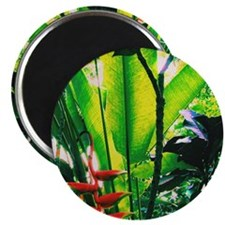 """Tropical 2 2.25"""" Magnet (10 pack)"""