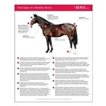 Vital Signs of a Healthy Horse 16x20 Poster