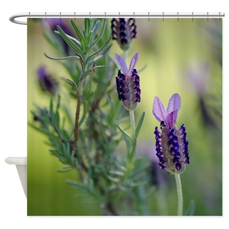 Spanish Lavender Shower Curtain By Tranquilphotos