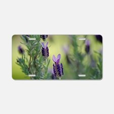 Spanish Lavender Aluminum License Plate