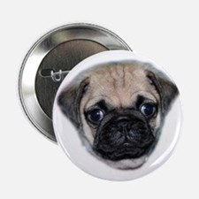 "Pug Puppy 2.25"" Button"