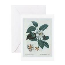 Cotton Greeting Card