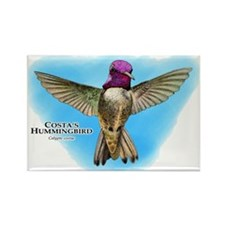 Costa's Hummingbird Rectangle Magnet