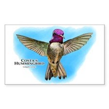 Costa's Hummingbird Decal