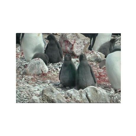 Adelie Penguin Chicks Rectangle Magnet