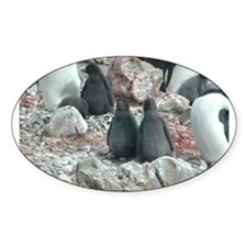 Adelie Penguin Chicks Oval Decal