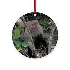 White-faced Capuchin Monkey Ornament (Round)