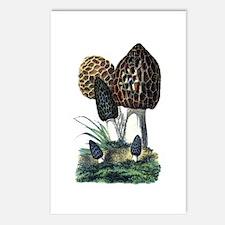 Mushroom Postcards (Package of 8)