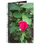 Blooming Rosebud