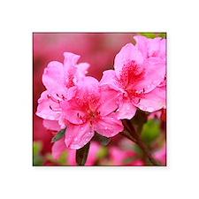 Pink azaleas Sticker