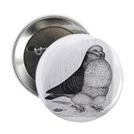 Chinese Owl Pigeon Button