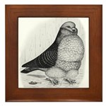 Chinese Owl Pigeon Framed Tile