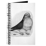 Chinese Owl Pigeon Journal