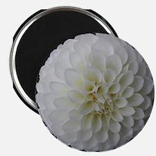 White Dahlia Magnet