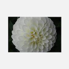 White Dahlia Rectangle Magnet