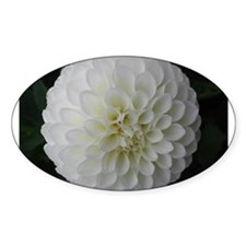 White Dahlia Oval Decal