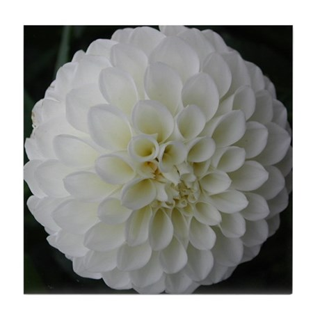 White Dahlia Tile Coaster