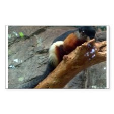 asian tricolored squirrel Rectangle Decal