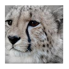 Cheetah Portrait 01 Tile Coaster
