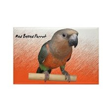 Red Bellied Parrot Rectangle Magnet