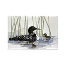 Loon and baby Rectangle Magnet (100 pack)