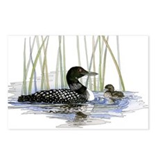 Loon and baby Postcards (Package of 8)