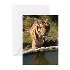 Tiger Snorkle Greeting Cards (Pk of 10)