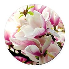 Sunlit Magnolias Round Car Magnet