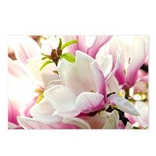 Sunlit Magnolias Postcards (Package of 8)