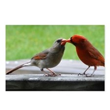 Kissing Cardinals Postcards (Package of 8)