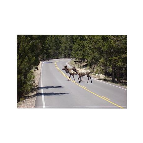 Elk in the Road - Estes Park, Colorado Rectangle M