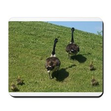Geese Family with babies Mousepad