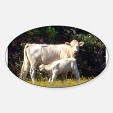 cow and calf Oval Decal