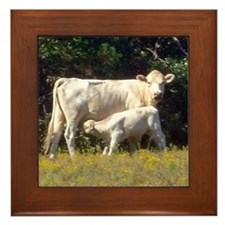 cow and calf Framed Tile