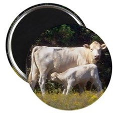 cow and calf Magnet
